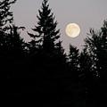 August Full Moon - 2 by Shirley Heyn
