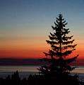 August Glow Pine by John Scatcherd