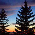 August Pine Clouds by John Scatcherd