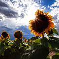 August Sky by Jim Garrison