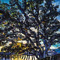 Aunt Kate's Old Live Oak by Stacey Sather