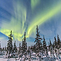 Aurora Borealis Over The Trees by Alan Dyer