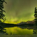 Aurora Over The Forest by Adam Jewell