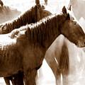 Wild Horses - Australian Brumbies 3 by Lexa Harpell