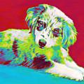 Aussie Puppy by Jane Schnetlage