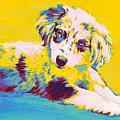 Aussie Puppy-yellow by Jane Schnetlage