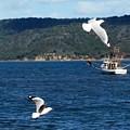Australia - Seagulls And Trawlers by Jeffrey Shaw