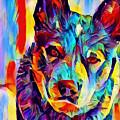 Australian Cattle Dog by Chris Butler