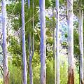 Australian Gum Trees by Sheila Smart Fine Art Photography