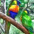 Australian Parakeets by Anthony Wynn