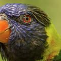 Australian Rainbow Lorikeet by Steven Parker