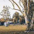 Australian Rural Countryside Landscape by Jorgo Photography - Wall Art Gallery
