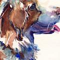 Australian Shepherd Puppy by Maria's Watercolor