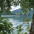Austrian Lake Through The Trees by Carol Groenen