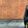 Auto Gallopalooza  by FineArtRoyal Joshua Mimbs