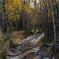 Autum Path by Donald Hansen