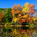 Autumn - Fall Color by Louis Dallara