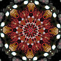 10446 Autumn 01 Kaleidoscope by Colin Hunt
