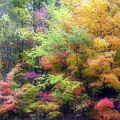 Autumn 2 - 16oct2016 by Jim Vance