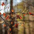 Autumn 2 by Baciu Isabelle Nicoleta