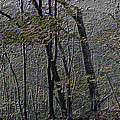 Autumn 2015 Panorama In The Woods Pa 01 by Thomas Woolworth