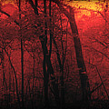 Autumn 2015 Panorama In The Woods Pa 06 by Thomas Woolworth