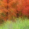 Autumn 3 - 16oct2016 by Jim Vance