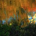 Autumn Abstract  by Ola Allen