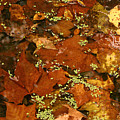 Autumn Abstract by Shari Jardina