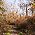 Autumn Afternoon On A Woodland Trail by MM Anderson