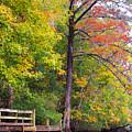 Autumn Along Brices Creek by Bob Decker