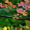 Autumn Along The Branch by LKB Art and Photography