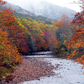 Autumn Along Williams River by Thomas R Fletcher