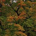 Autumn Arrives by Garry Gay