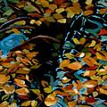 Autumn by Art Nomad Sandra  Hansen