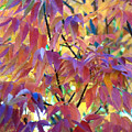 Autumn Ash Tree 1 by Steve Ohlsen