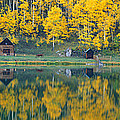 Autumn Aspens Along Route 550, North by Panoramic Images
