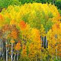 Autumn Aspens by Eggers Photography