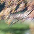Autumn At Allerton Pond by Deborah Hughes