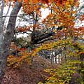 Autumn At Beech Forest by Steven Scanlon