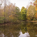 Autumn At Jeffries Creek Nature Park by MM Anderson