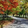 Autumn At Oatlands Lane by Ronda Ryan