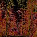 Autumn Aura by Dan Hassett