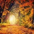 Autumn Avenue by Autumn Scenes
