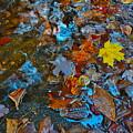 Autumn B 2015 123 by George Ramos