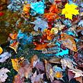 Autumn B 2015 124 by George Ramos