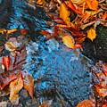 Autumn B 2015 183 by George Ramos