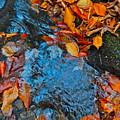 Autumn B 2015 185 by George Ramos