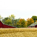 Autumn Barns by Pat Cook
