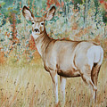 Autumn Beauty- Mule Deer Doe  by Elaine Booth-Kallweit